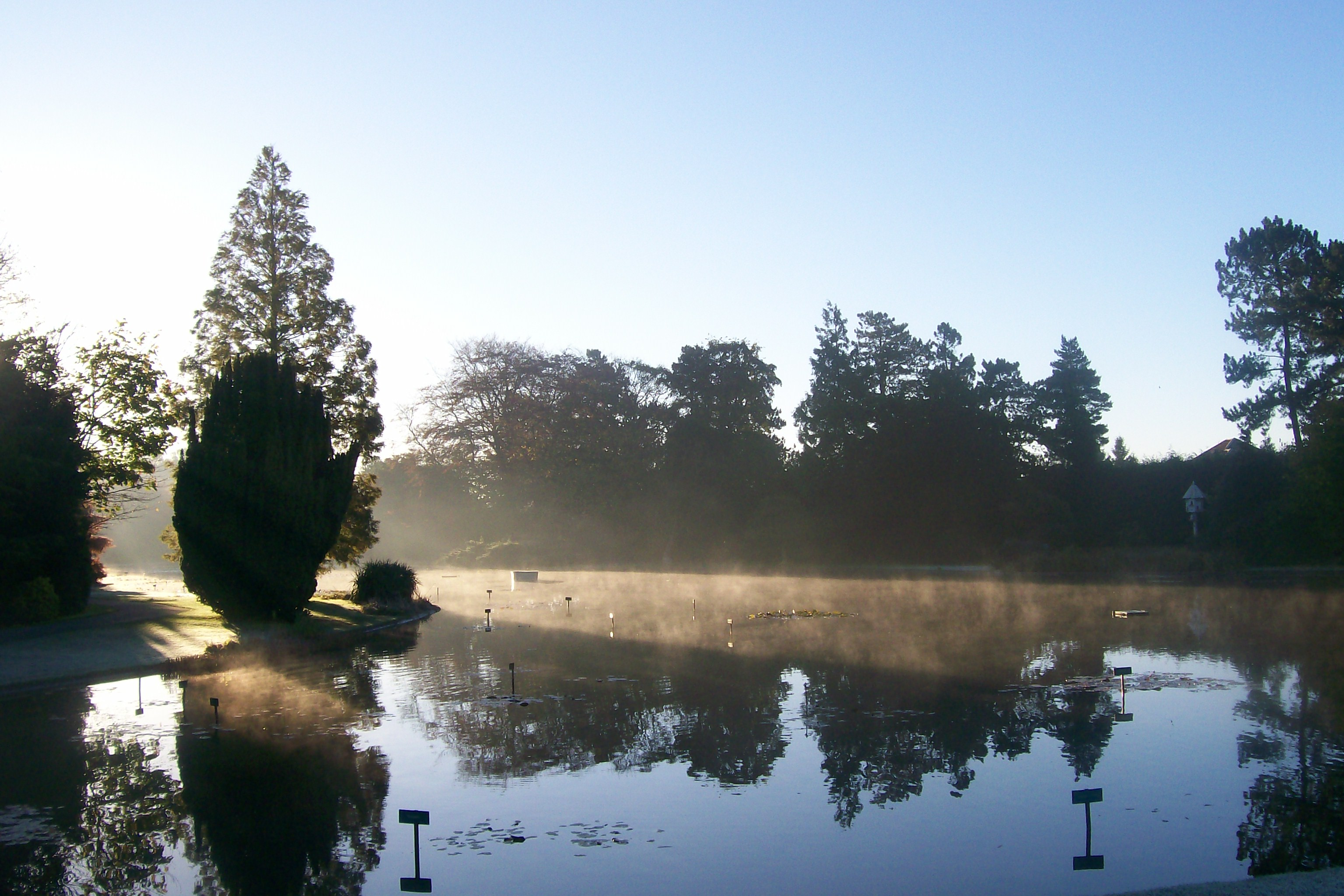A beautiful lake skirted by plants and trees at Burnby Hall Gardens